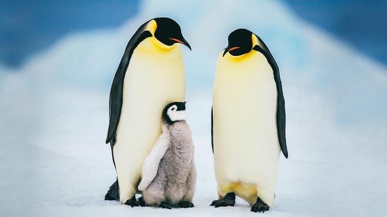 CentOS Linux: nulláról a webszerverig