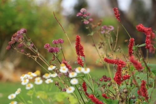 Naadivaba lillepeenar